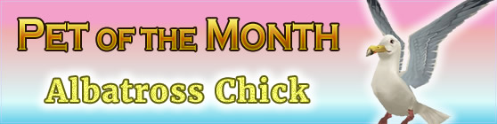 Albatross Chick - Pet of the Month June 2017