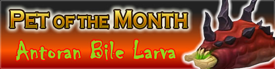 Antoran Bile Larva - Pet of the Month October 2017